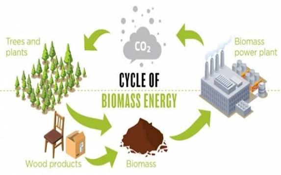 EIA更新美国2019—2020年的生物质能源预测