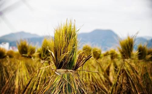 稻草变黄金:生物质电催化转化实现绿色高效升级