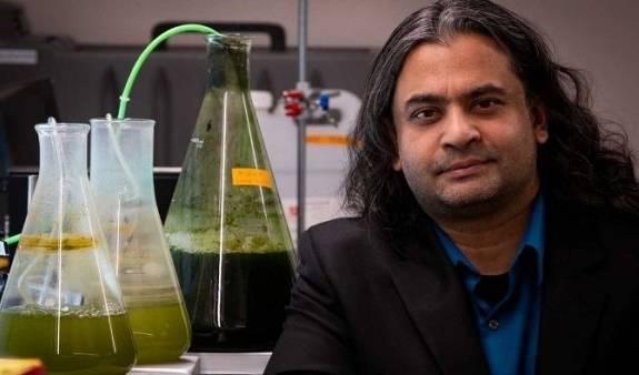 美国犹他大学研究出将藻类转化为一种生物原油