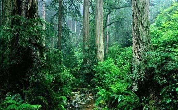 澳大利亚建设成为第一个森林风电场