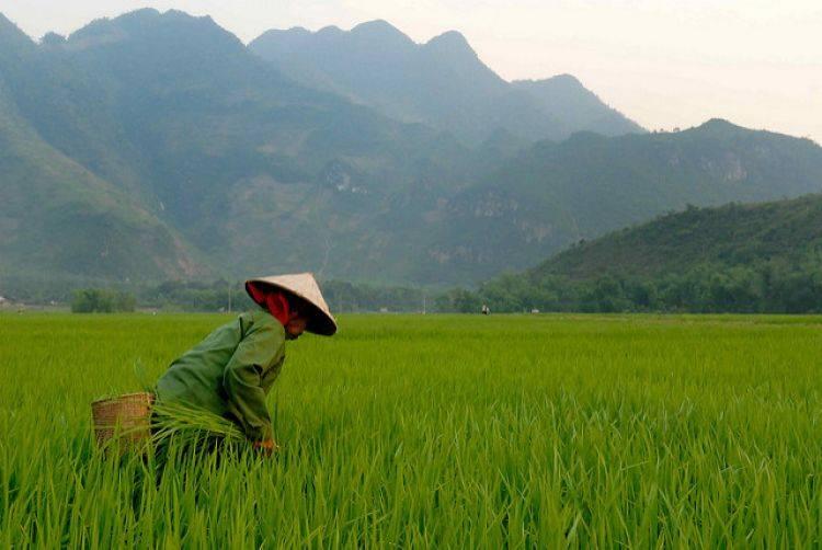 越南企业在Binh Thuan完成40MW太阳能项目