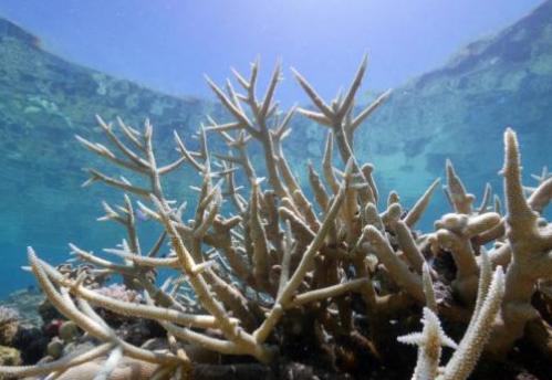 斐济敦促澳大利亚为抑制气候变暖做出更多贡献!减少使用煤炭能源