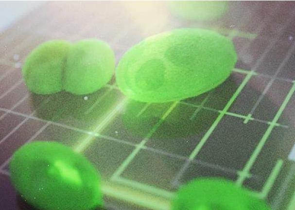 生物光伏有望成为新一代环境友好型太阳能发电技术!