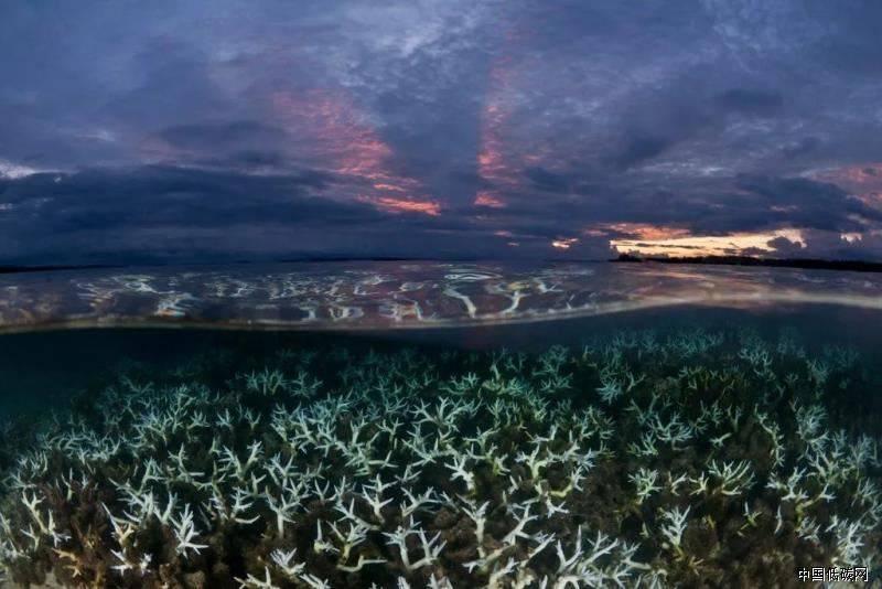 2019年全球海洋温度创新高  再次为全球变暖敲响尊崇!