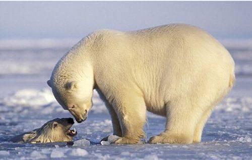 《自然·通讯》:应该把生物多样性摆在气候变化政策的核心位置