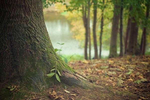 IPCC:继续把可再生木材能源作为减缓气候变化所有战略的关键