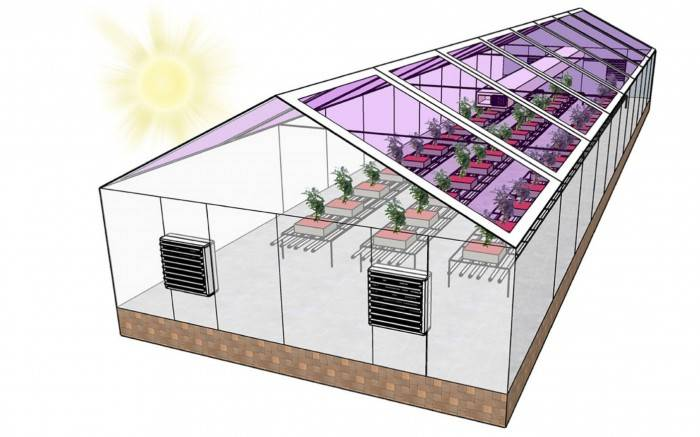 半透明太阳能电池可以使温室在能源上自给自足