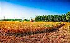 农村秸秆利用获政策支撑 生物质供热亟待加速发展