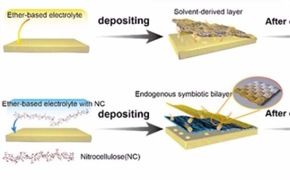 研究發現內共生氮化鋰/纖維素層可延長鋰金屬負極循環壽命