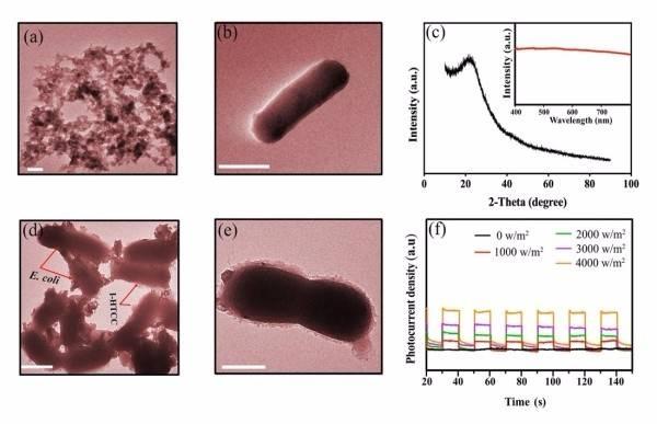 深圳先进院等构建一套有机半导体材料赋能大肠杆菌光驱动产氢体系
