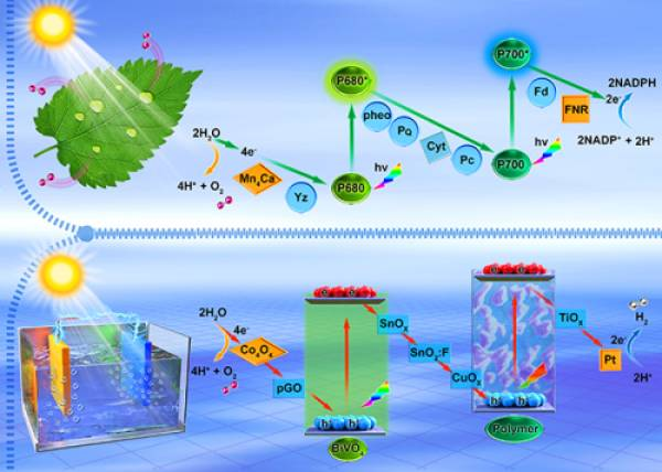 大连化物所在光电催化分解水制氢研究中取得进展